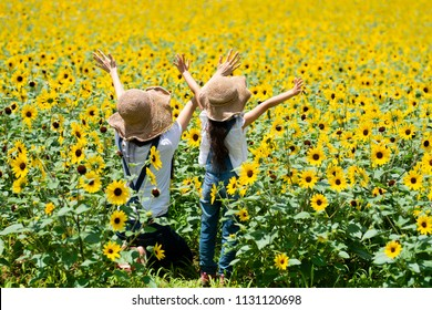 Sunflower field and parent and child