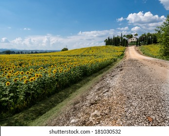 sunflower field with a street and a house