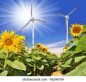 sunflower field with wind turbines