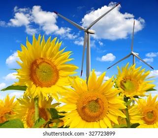 Sunflower field with wind turbines. Spring landscape.