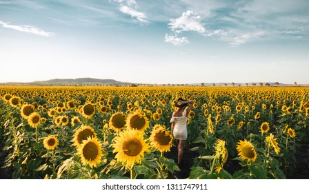 Sunflower Fields of Allora, Outback Queensland