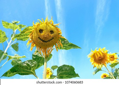 sunflower flower on natural background. summer season concept. funny sunflower with smile. copy space