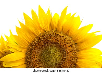 Sunflower flower on a white background