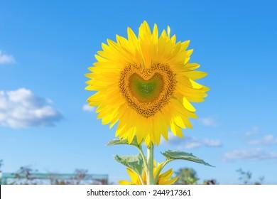 Sunflower Heart Images, Stock Photos & Vectors   Shutterstock