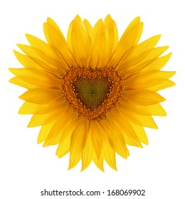 Sunflower flower in the shape of heart isolated on a white background