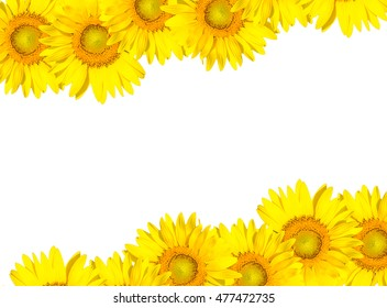sunflower frame isolated on white