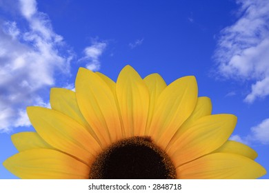 sunflower in front of blue sky