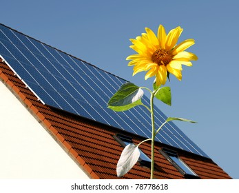 Sunflower in front of a house with solar panels
