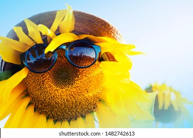 Sunflower in glassas over blue sky/ summer holidays consept background with sunflower