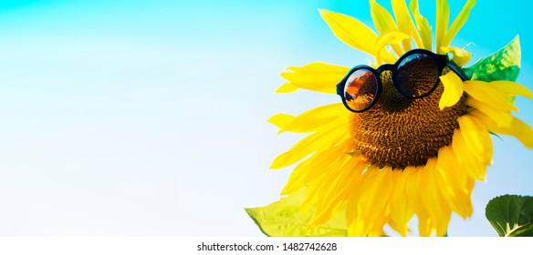 Sunflower in glassas over blue sky/ summer holidays consept background with sunflower