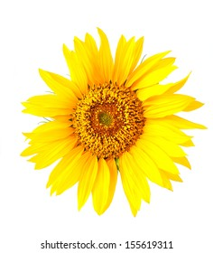 Sunflower head isolated on white