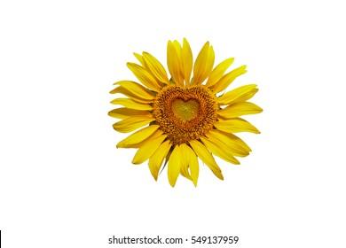 Sunflower Heart Images, Stock Photos & Vectors | Shutterstock