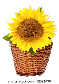 Sunflower - isolated on white background. Shallow depth of field