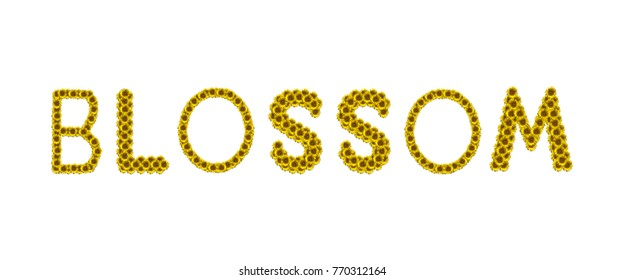 Sunflower letter arrange in the word Blossom, clipping path included.