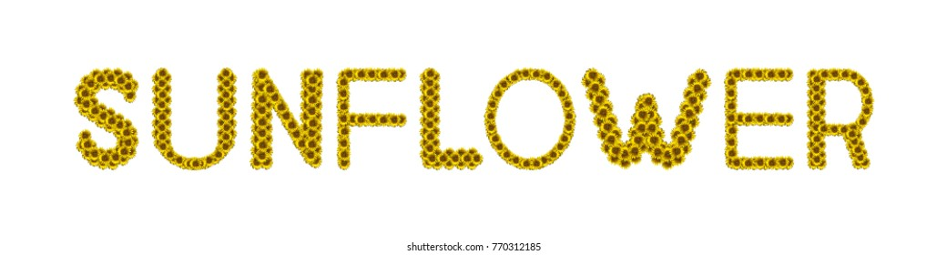 Sunflower letter arrange in the words Sunflower, clipping path included.