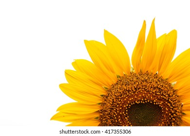 Sunflower on the background.