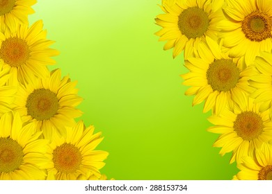 a sunflower on green bokeh