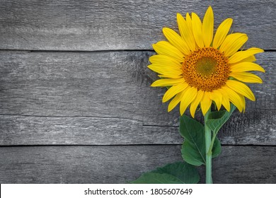 sunflower on an old wooden table, rustic background, free space for text,