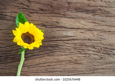 Sunflower On Wooden Background With Copy Space