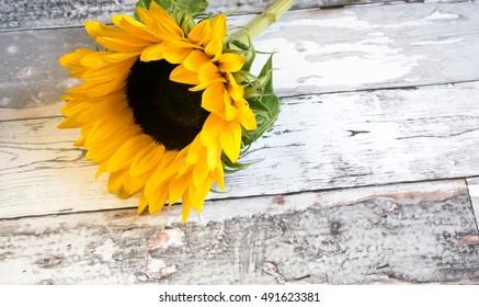 sunflower on wooden floor