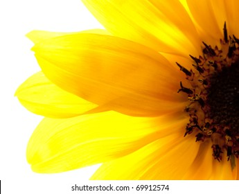 Sunflower part close up isolated on white