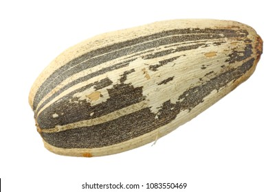 sunflower seed closeup isolated on white background