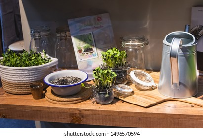 Sunflower seed is germinating, Display in Home and Garden Exhibition at Bitec Bangna Bangna-Trad road Bangna Bangkok Thailand, August 4, 2019