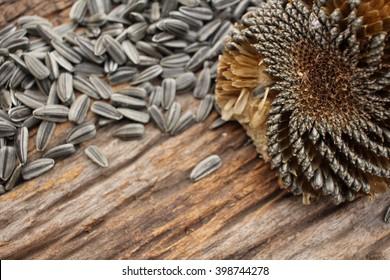 sunflower seeds.