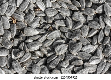 Sunflower seeds as background or texture and pattern