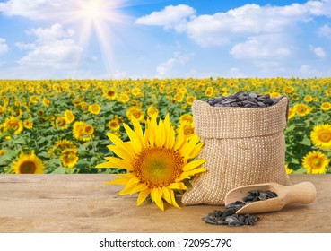 sunflower seeds in burlap bag and scoop on wooden table with natural background. Blooming field with blue sky and sunshine. Agriculture and harvest concept