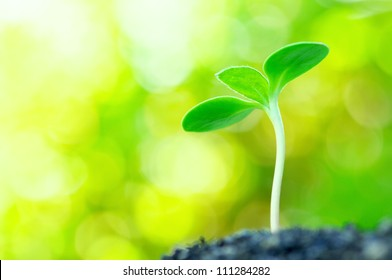 Sunflower sprout on yellow bokeh background.(horizontal)