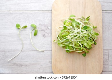 Sunflower sprouts in the plate on wood table