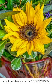 Sunflower surrounded by green plants