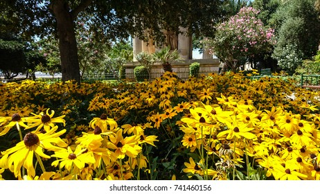 Sunflower Upper Barrakka Garden parc, valletta, Malta