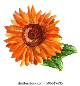 sunflower watercolor.watercolor flowers.hand-drawing