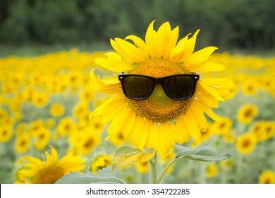 Sunflower wearing sunglasses