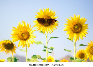 Sunflower wearing sunglasses, Looks like a mouth open to say something. (Flowers with faces)