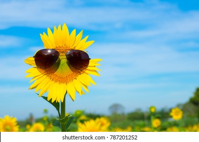 Sunflower wearing sunglasses with morning light.