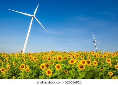 sunflower and wind turbine generator