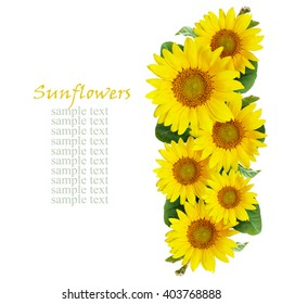 Sunflowers arrangement isolated on white