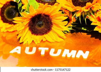 Sunflowers with Autumn as a background