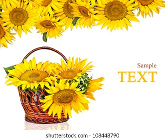 sunflowers in basket isolated on white background