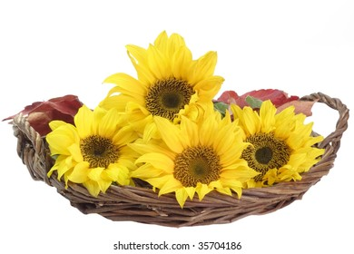 Sunflowers in a basket - isolated on white background