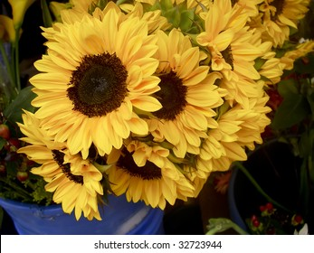 Sunflowers in a blue potted found in an Ecuador market