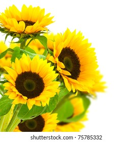 sunflowers border over a white background