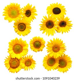 Sunflowers bouquet collection on the white background