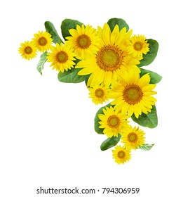 Sunflowers corner arrangement isolated on white background. Flat lay. Top view.