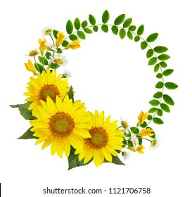 Sunflowers, daisies and acacia flowers and green leaves in a round frame isolated on white background. Flat lay. Top view.