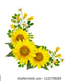 Sunflowers, daisies and acacia flowers and green leaves in a corner arramgement isolated on white background. Flat lay. Top view.