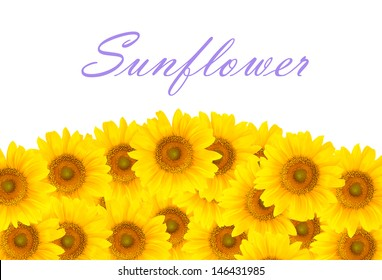 a lot of sunflowers  for decoration